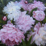 Peonies of Giverny